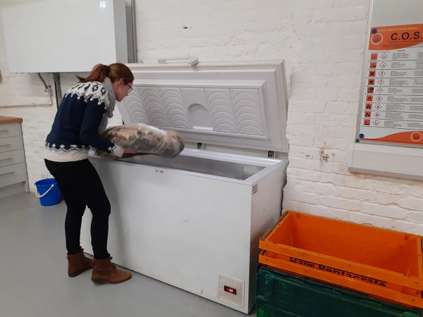 Helen placing a padded and wrapped WRNS uniform into a freezer