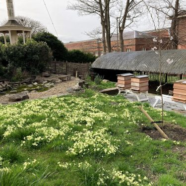 Three bee hives on stands sitting among primroses